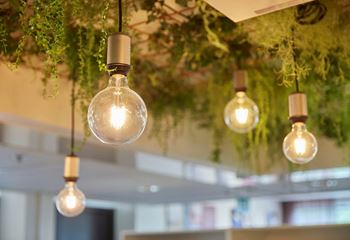 Close up of four light bulbs hanging from the roof, with indoor vegetation surrounding. Photo/illustration: Joakim Kröger